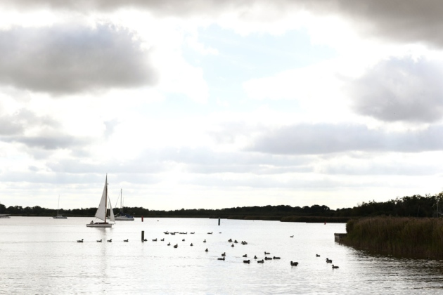 sailing boats and ducks on water under a grey sky, surrounded by trees